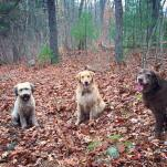 Rosie, Islay and Skyler