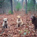 Rosie, Islay and Skyler