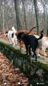 Monty, Sammy, Niko and Bailey