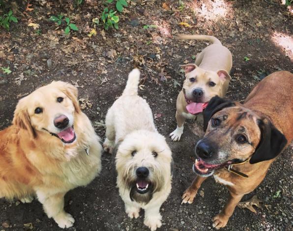 Islay, Rosie, Ninja and Sammy